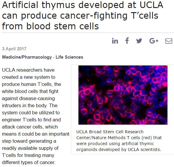 Artificial Thymus UCLA Article