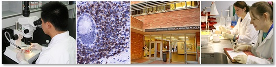 Research Training: PhD Programs. UCLA Dept of Pathology & Laboratory Medicine.